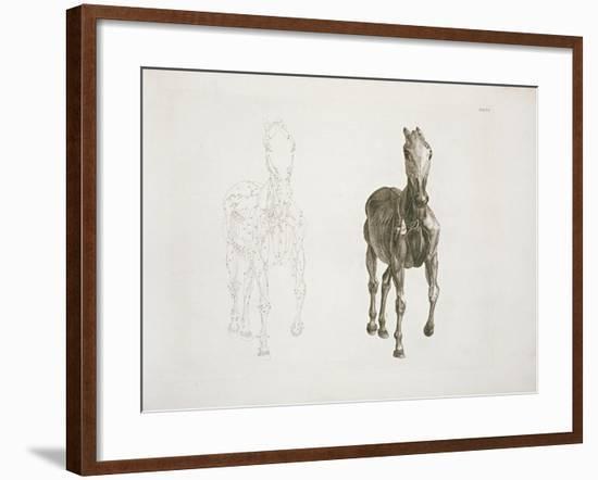 Tab. Viii, from 'The Anatomy of the Horse...' 1766-George Stubbs-Framed Giclee Print