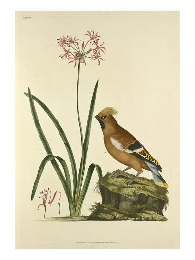 Tab VIII-John Frederick Miller-Giclee Print