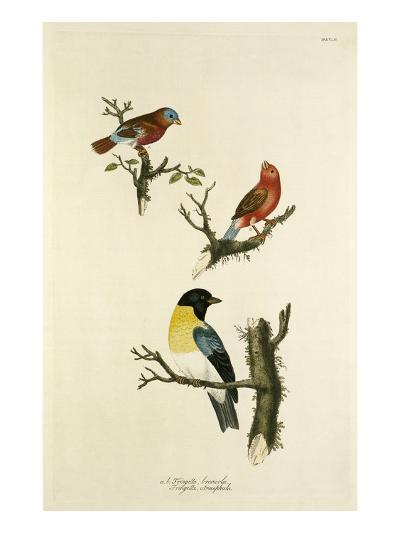 Tab XLII-John Frederick Miller-Giclee Print
