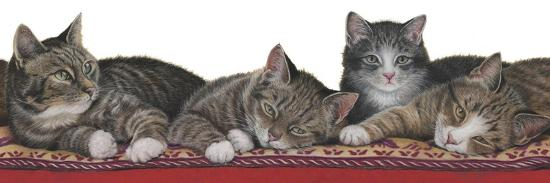 Tabbies White Background-Janet Pidoux-Giclee Print