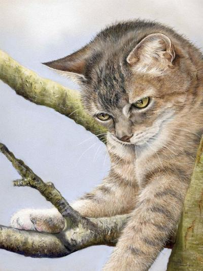 Tabby in Tree-Janet Pidoux-Giclee Print