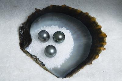 https://imgc.artprintimages.com/img/print/tahitian-black-pearls-on-rock-salt_u-l-polrwl0.jpg?p=0