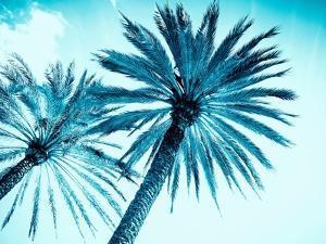 Chic Palms by Tai Prints