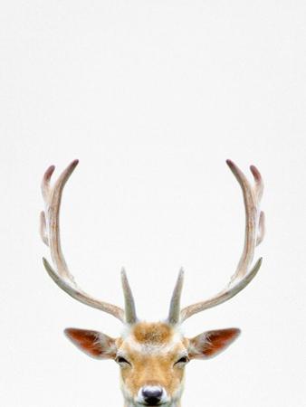 Deer by Tai Prints