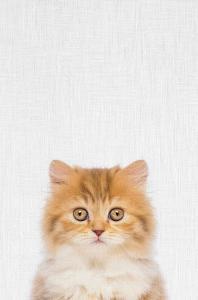Kitten by Tai Prints