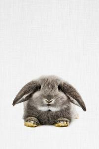 Rabbit II by Tai Prints