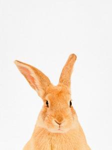 Rabbit by Tai Prints