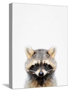 Raccoon by Tai Prints