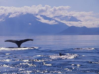 Tail of a Humpback Whale in Frederick Sound--Photographic Print