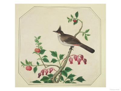 Taiwan Yuhina, c.1800-40--Giclee Print