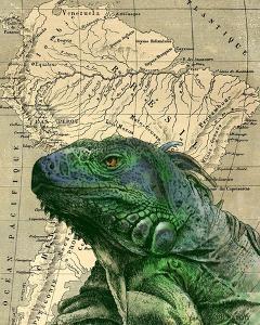 Brazilian Iguana by Take Me Away