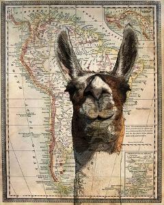 South America Llama Map by Take Me Away