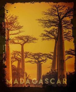 Vintage Baobab Trees in Madagascar, Africa by Take Me Away