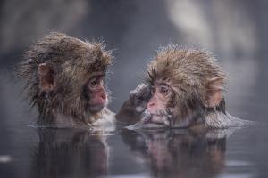 Friends by Takeshi Marumoto