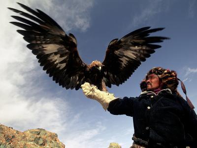 Takhuu Raising His Eagle, Golden Eagle Festival, Mongolia-Amos Nachoum-Photographic Print