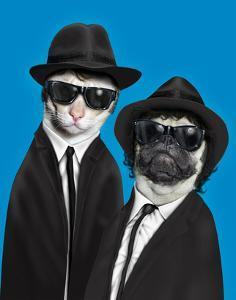 Brothers (Pets Rock) by Takkoda
