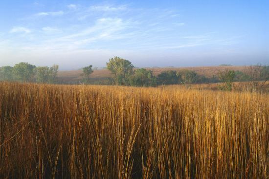 Tall Bluestem Grass Covers the Countryside-Michael Forsberg-Photographic Print