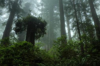 Tall Cool Mist-Vincent James-Photographic Print