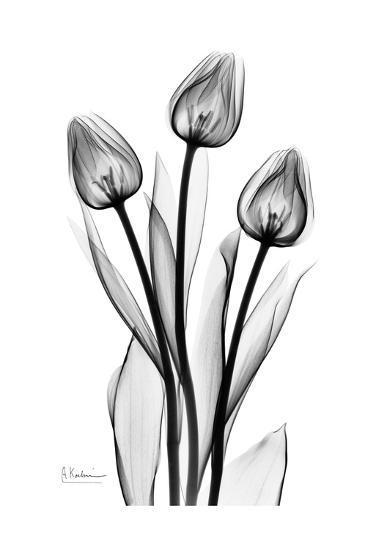 Tall Early Tulips N Black and White-Albert Koetsier-Art Print