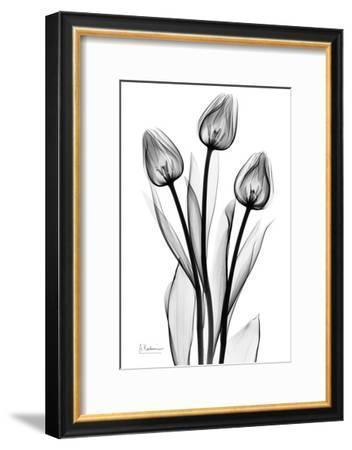 Tall Early Tulips N Black and White-Albert Koetsier-Framed Art Print