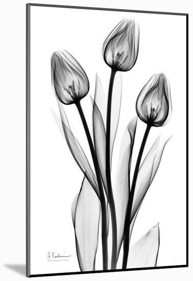 Tall Early Tulips N Black and White-Albert Koetsier-Mounted Art Print