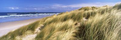 Tall Grass on the Beach, Bamburgh, Northumberland, England--Photographic Print