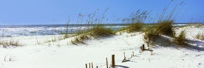 Tall Grass on the Beach, Perdido Key Area, Gulf Islands National Seashore, Pensacola, Florida, USA--Photographic Print