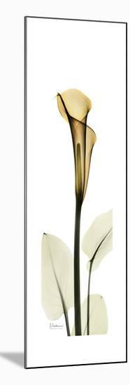 Tall Orange Lily-Albert Koetsier-Mounted Art Print