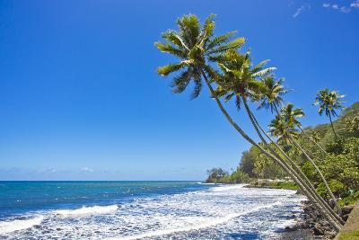 Tall, Thin Palm Trees Reaching Out to Sea on the Coast of Tahiti-Mike Theiss-Photographic Print