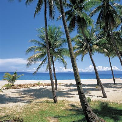 Tall Tropical Palm Trees on Sandy Beach--Photographic Print