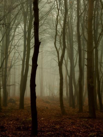 Tall Woods-David Baker-Photographic Print