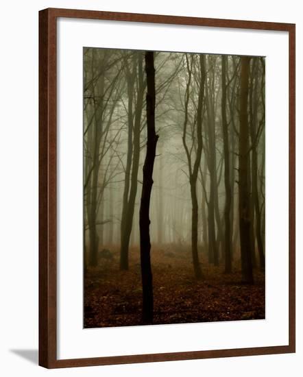 Tall Woods-David Baker-Framed Photographic Print