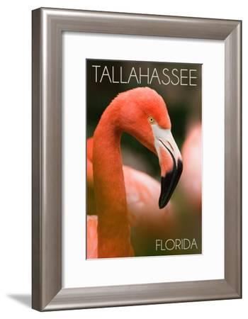 Tallahassee, Florida - Flamingo Up Close-Lantern Press-Framed Art Print