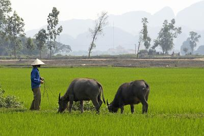 Tam Coc, Ninh Binh Area, Vietnam, Indochina, Southeast Asia, Asia-Bruno Morandi-Photographic Print