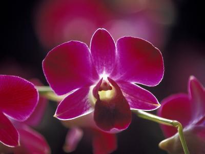 Taman Orchid, Kuala Lumpur, Malaysia-Michele Molinari-Photographic Print