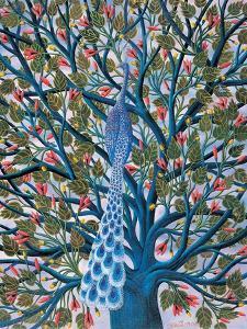Peacock in Tree by Tamas Galambos