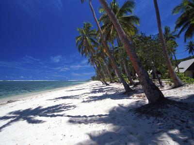 Tambua Sands Resort, Palm Trees and Shadows on Beach, Coral Coast, Melanesia-David Wall-Photographic Print