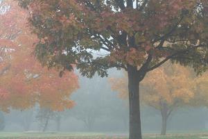 Foggy Trees II by Tammy Putman