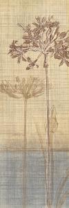 Botanical Sketchbook II by Tandi Venter