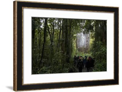 Tane Mahuta, Giant Kauri Tree in Waipoua Rainforest, North Island, New Zealand-David Noyes-Framed Photographic Print