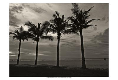 Palms at Night VI
