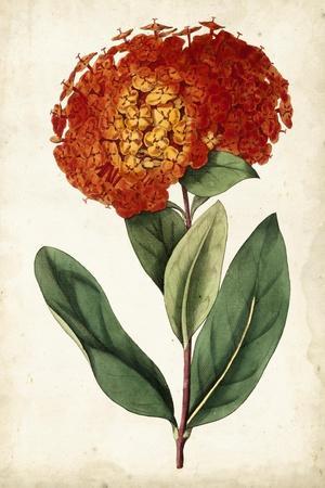 https://imgc.artprintimages.com/img/print/tangerine-floral-ii_u-l-q1bh63z0.jpg?p=0