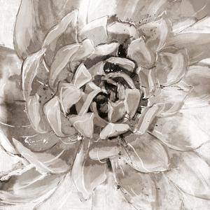 Cereus Aeonium - Fawn by Tania Bello