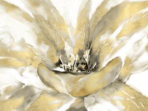 Concerto Luxe by Tania Bello