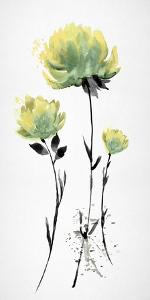 Floret Blush II by Tania Bello