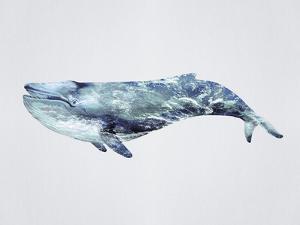 Ocean Explorer - Blue by Tania Bello