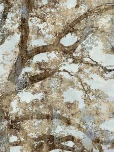 Tree Canopy II by Tania Bello