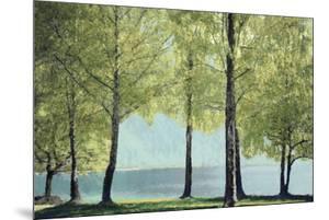 Treescape by Tania Bello