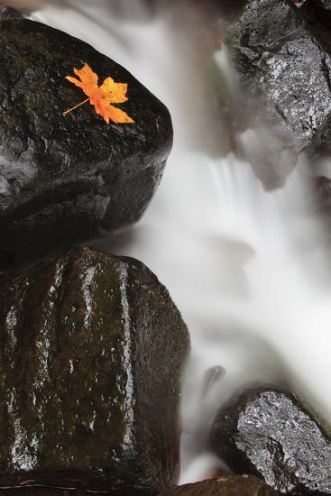 Tanner Creek, Columbia River Gorge, Oregon, USA-Jamie & Judy Wild-Photographic Print
