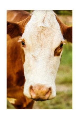 Hovey Cow 4